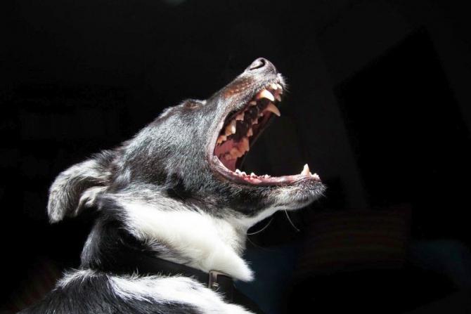Câine. Foto: Pixabay