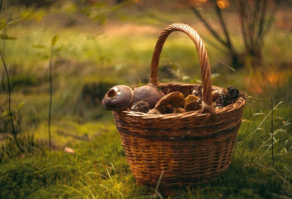 Ciuperci de pădure. Foto: Pixabay