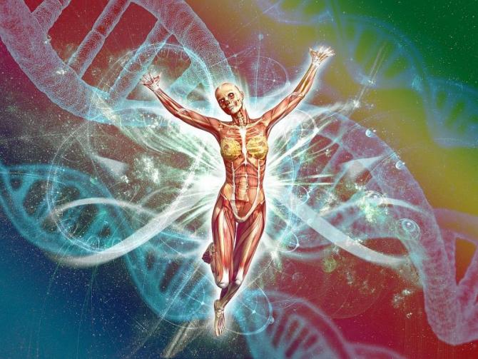 Materialul genetic contează. Foto: Pixabay