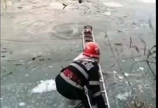 Câine salvat din apele înghețate ale râului Târnava Mare. Foto: MAI