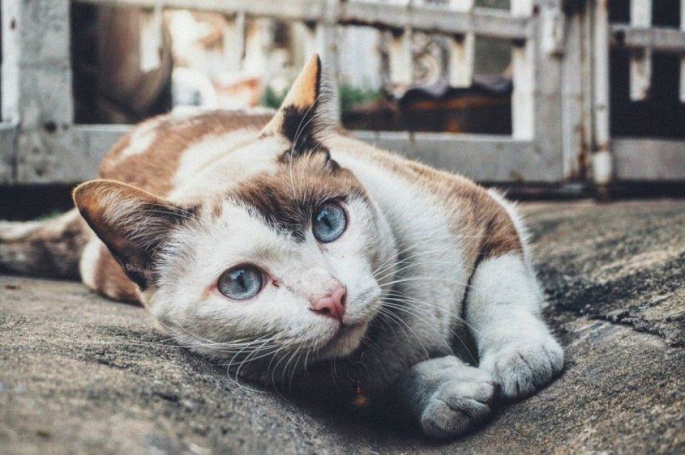 Pisică. Foto: Pixabay