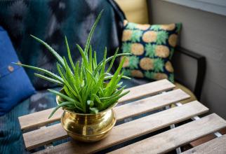 10 plante de apartament care îți otrăvesc încet sănătatea, FOTO unsplash