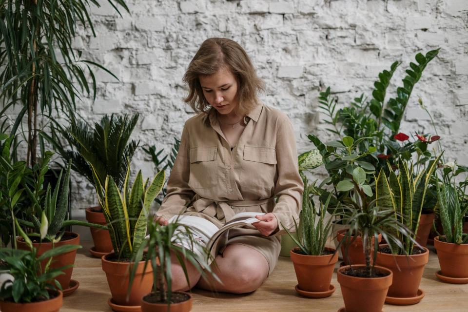 5 plante sălbatice care te pot UCIDE și 5 care îți pot SALVA viața, FOTO pexels
