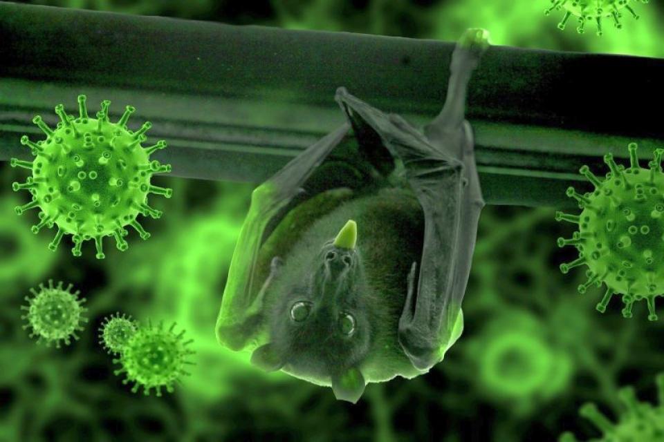 Liliecii poartă mii de coronavirusuri. Foto: Pixabay