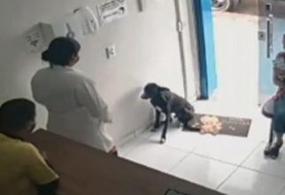 Câinele a intrat singur în cabinetul veterinar    Foto: captură video Digi 24