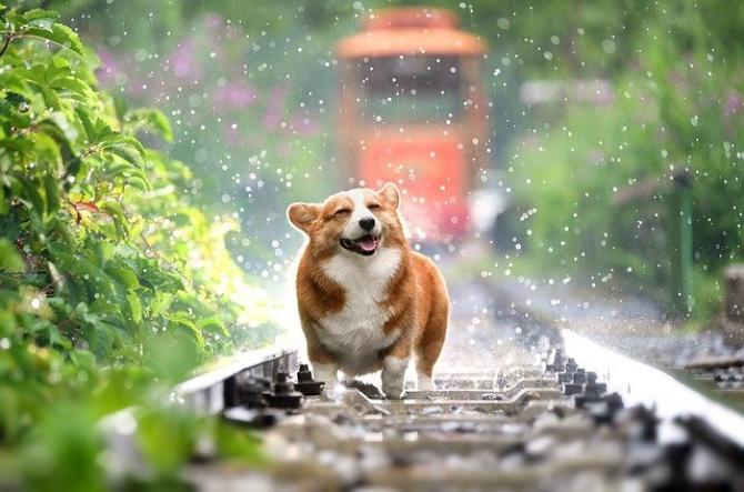 Câine în ploaie  FOTO: pixabay