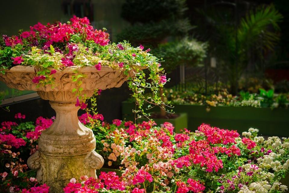 Plante în grădină  FOTO: pixabay