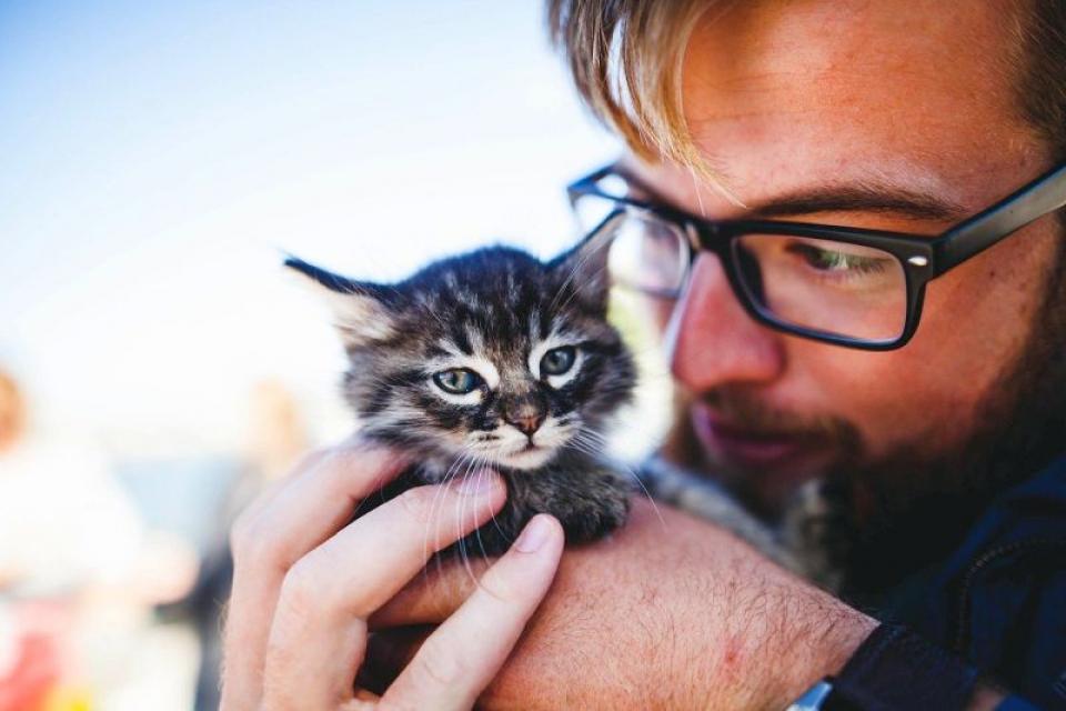 Oamenii pot transmite pisicilor lor coronavirusul care declanșează COVID-19. Foto: Pixabay