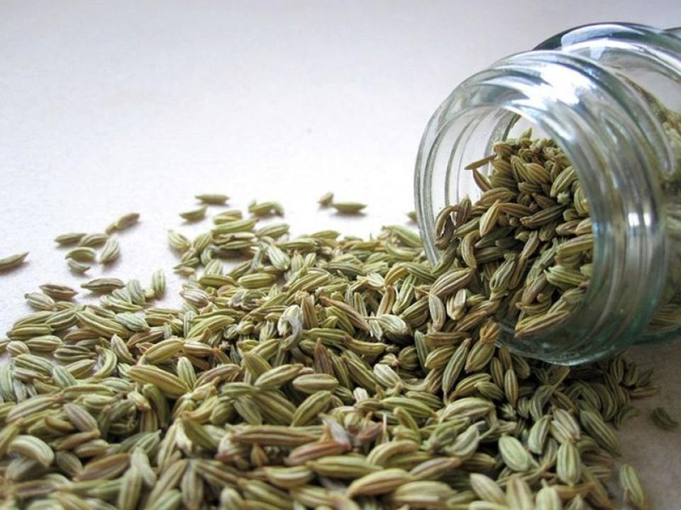 Semințe de fenicul. Foto: Pixabay