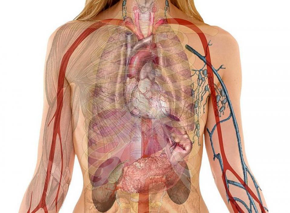 Leacuri pentru cele mai importante organe. Foto: Pixabay