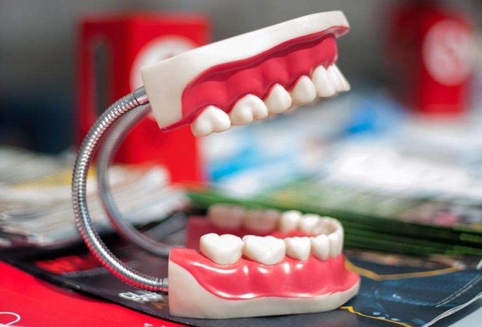 Educație dentară. Foto: Pixabay