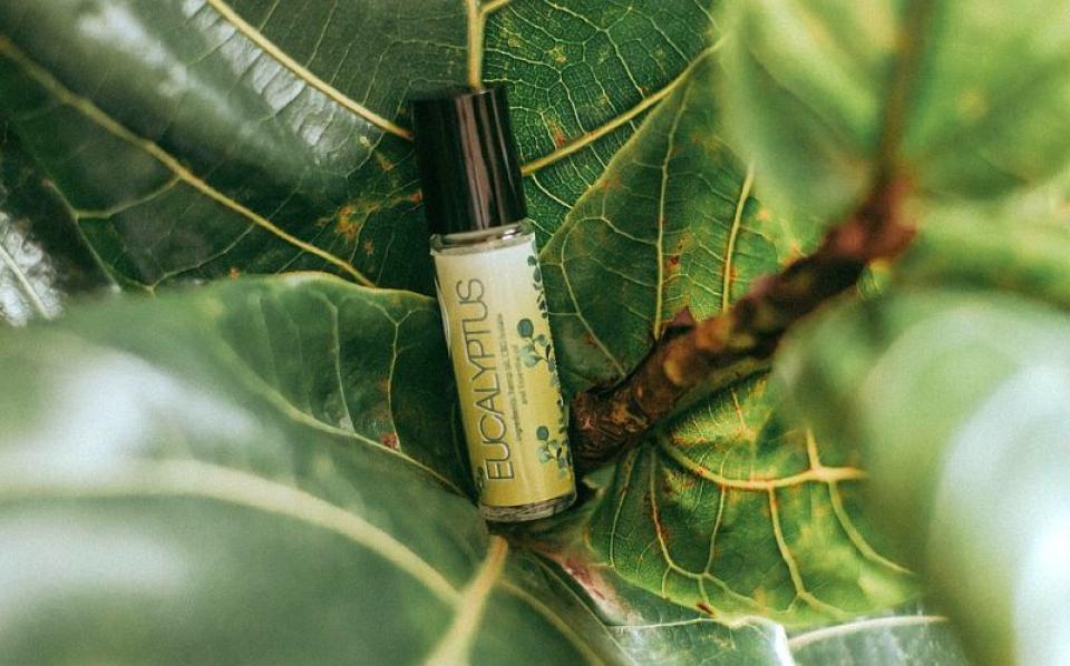 Uleiul de eucalipt. Foto: Pixabay