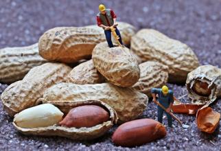 Dieta poate include și alune. Foto: Pixabay