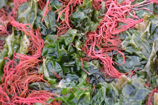 Alegele marine roșii reduc riscul de cancer de colon. Foto: Pixabay