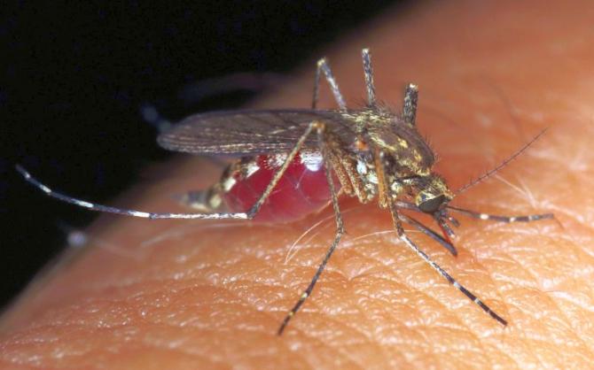 Mușcătura de țânțar      Foto: Pixabay