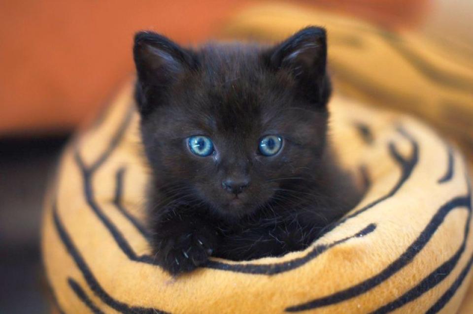 Zodiacul ghinioniștilor: zodii care par că le taie zilnic pisica neagră calea. Foto: Pixabay