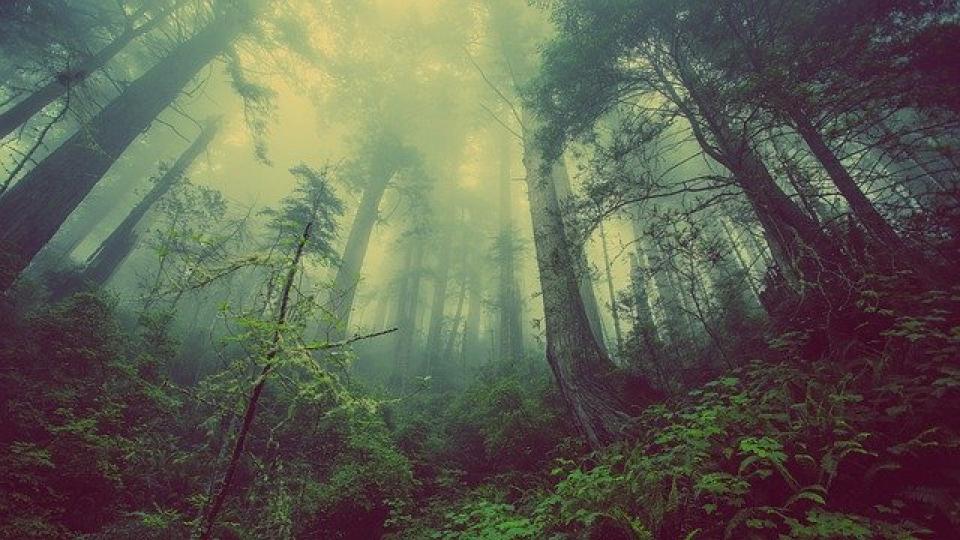 Horoscop: Arborele care te reprezintă    Foto: pixabay.com