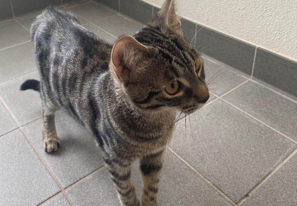 Pisică salvatoare  FOTO: Twitter Poliția din Strasbourg