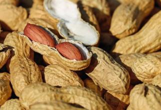 E bine să consumi alune în fiecare zi. Foto: Pixabay