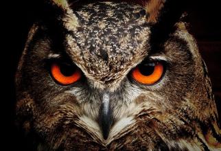 Animalul spiritual al zodiei tale    Foto: pixabay.com